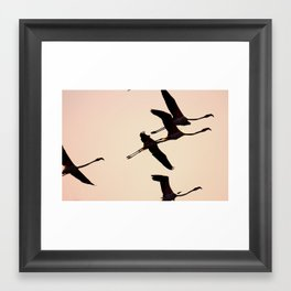 Fabulous Flamingos Framed Art Print