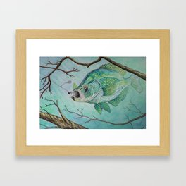 Crappie and Jig Framed Art Print