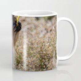 Prairie Dog Eating A Chip Coffee Mug