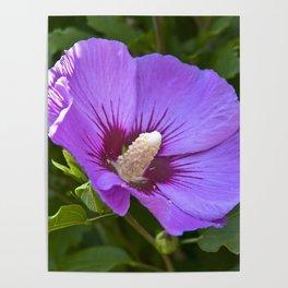 Pink Floral Impression Poster