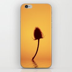 Golden Teazle Glow iPhone & iPod Skin