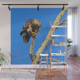 Houdini in Feathers! Wall Mural