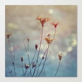 Soft Queen Anne's Lace and Bokeh Canvas Print