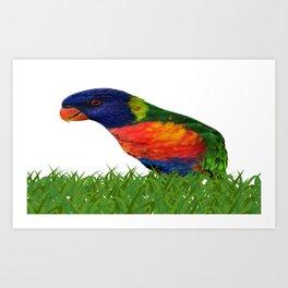 Lorikeet Bird Art Art Print