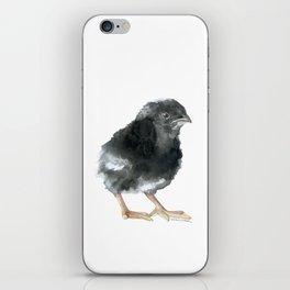 Barred Rock Chick Watercolor iPhone Skin