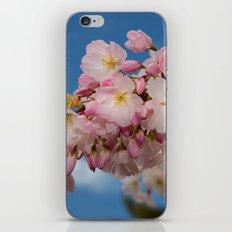 Cherry Blossoms (Edit 1) iPhone Skin