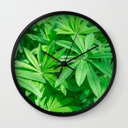Beautiful green foliage with dew drops on the leaves in sunny day Wall Clock