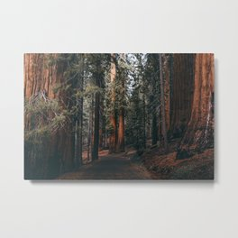 Walking Sequoia Metal Print