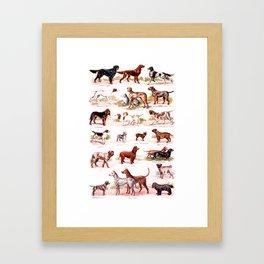 vintage dog breed chart  Framed Art Print