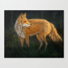 Curious Red Fox Canvas Print