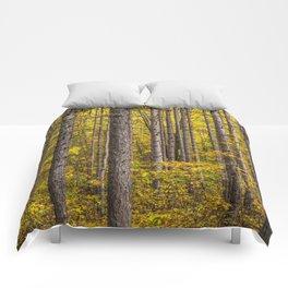 Fall Colors among Pine Trees Comforters