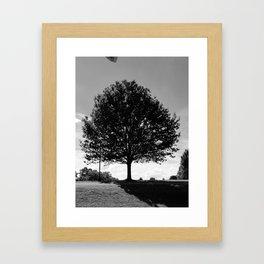 Trees in Maysviile Kentucky in USA Framed Art Print