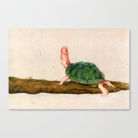 penis Canvas Prints featuring The Rare Penis-Head Turtle by C.M. Duffy