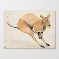kangaroo Canvas Prints featuring Kangaroo by 1k Blooms Studios