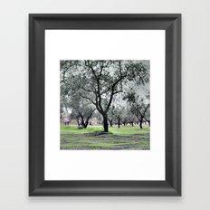 fishing olives verda-2 Framed Art Print