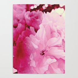 Plum Blossoms-Flowering For No One, No Reason Poster