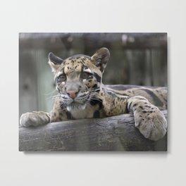 Wild Baby Leopard Metal Print