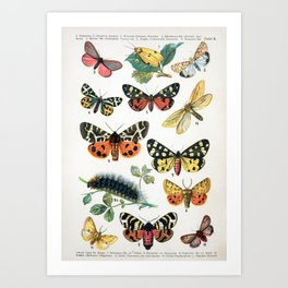 Butterfly Chart Vintage Art Print