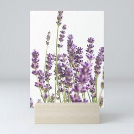 Purple Lavender #3 #decor #art #society6 Mini Art Print