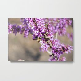 Bee on a Branch Metal Print