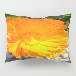 Bright Orange Marigold In Bright Sunlight Pillow Sham