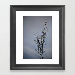Autumn-Dandelion Framed Art Print