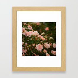 Flores de julio en Madrid Framed Art Print