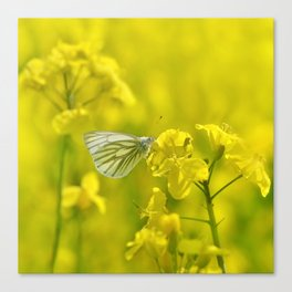 Rape with a butterfly 62 Canvas Print