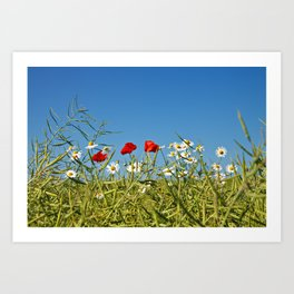 Flowers on a canola field Art Print