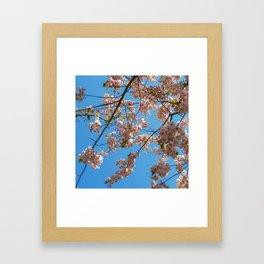 Cherry Blossoms and Blue Sky at Kew Gardens 2019 Framed Art Print