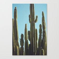 At the Cactus Garden Canvas Print