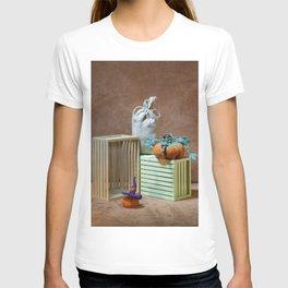 Still life with handmade pumpkins from felted wool T-shirt