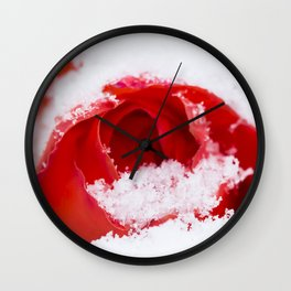 A lone rose resting in the snow after a late London snowstorm in March Wall Clock