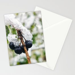 Buckthorn Berries with Snow Stationery Cards