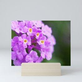 Purple Flowers in The Garden Mini Art Print