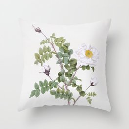 Vintage White Burnet Roses Illustration Throw Pillow