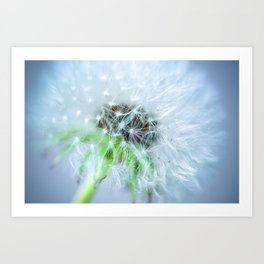 the blowball Art Print