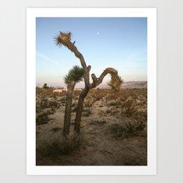 Dusk in Joshua Tree (iPhone) Art Print