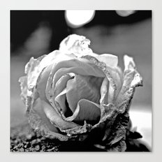 Wilting rose Canvas Print