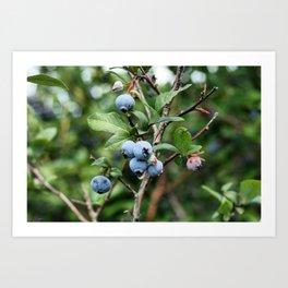 Blueberry Picking Art Print