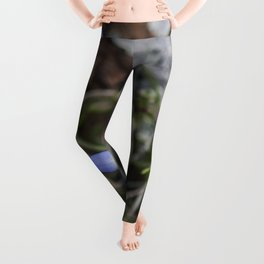 May Bluets Leggings