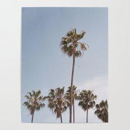 Venice Beach Palm Tress Poster