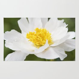 White Krinkled Peony in Bloom Rug