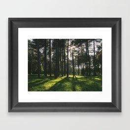 Sunlight through forest of Pine trees (Pinus sylvestris). Thetford, Norfolk, UK. Framed Art Print