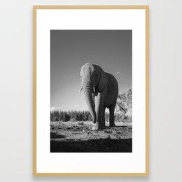 Sally the Elephant Framed Art Print