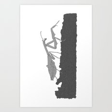 Praying Mantis B/W Art Print
