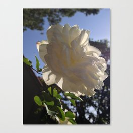 WhiteRose Canvas Print