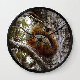 Jeronimo Rubio Photography   Peanut the Squirrel   I See You Wall Clock