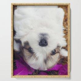 Shitzu Dog Serving Tray