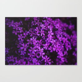 Flowers in Purple, Ultra Violet Canvas Print